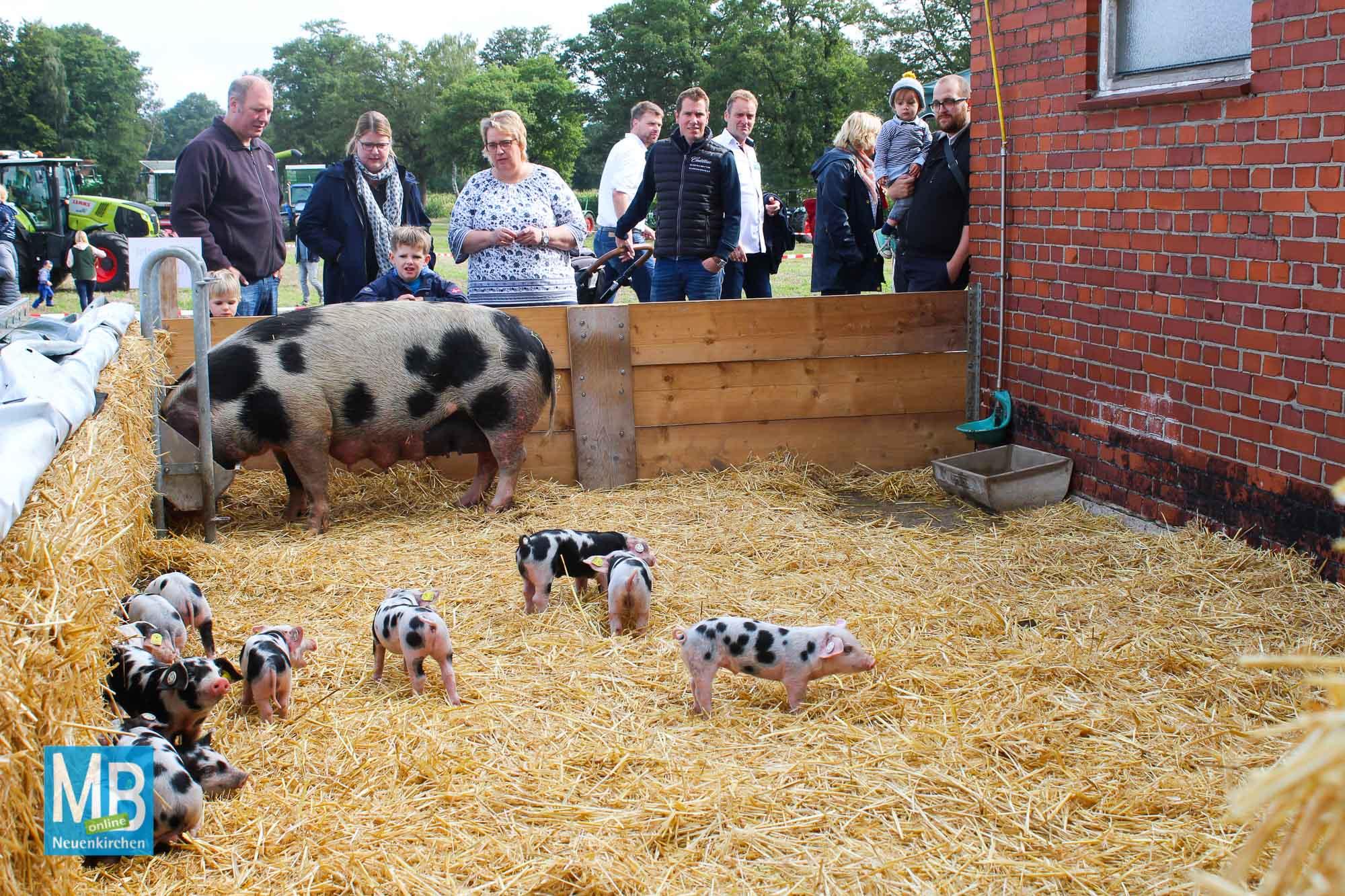 """""""Guter Bauer""""-Hoffest des Online-Hofladens und nachhaltige Landwirtschaft aus der Region.   Foto: Lea Helene Kaumanns"""