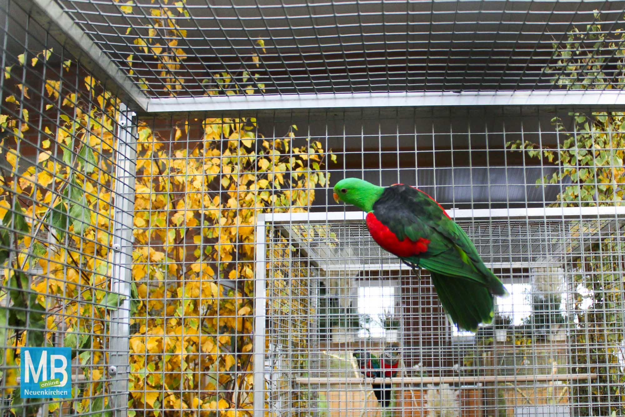 Ausstellung und Vereinsmeisterschaft von Vogelschutz- und Zuchtverein Kanaria 64 und IZG Rheine | Foto: Kaumanns
