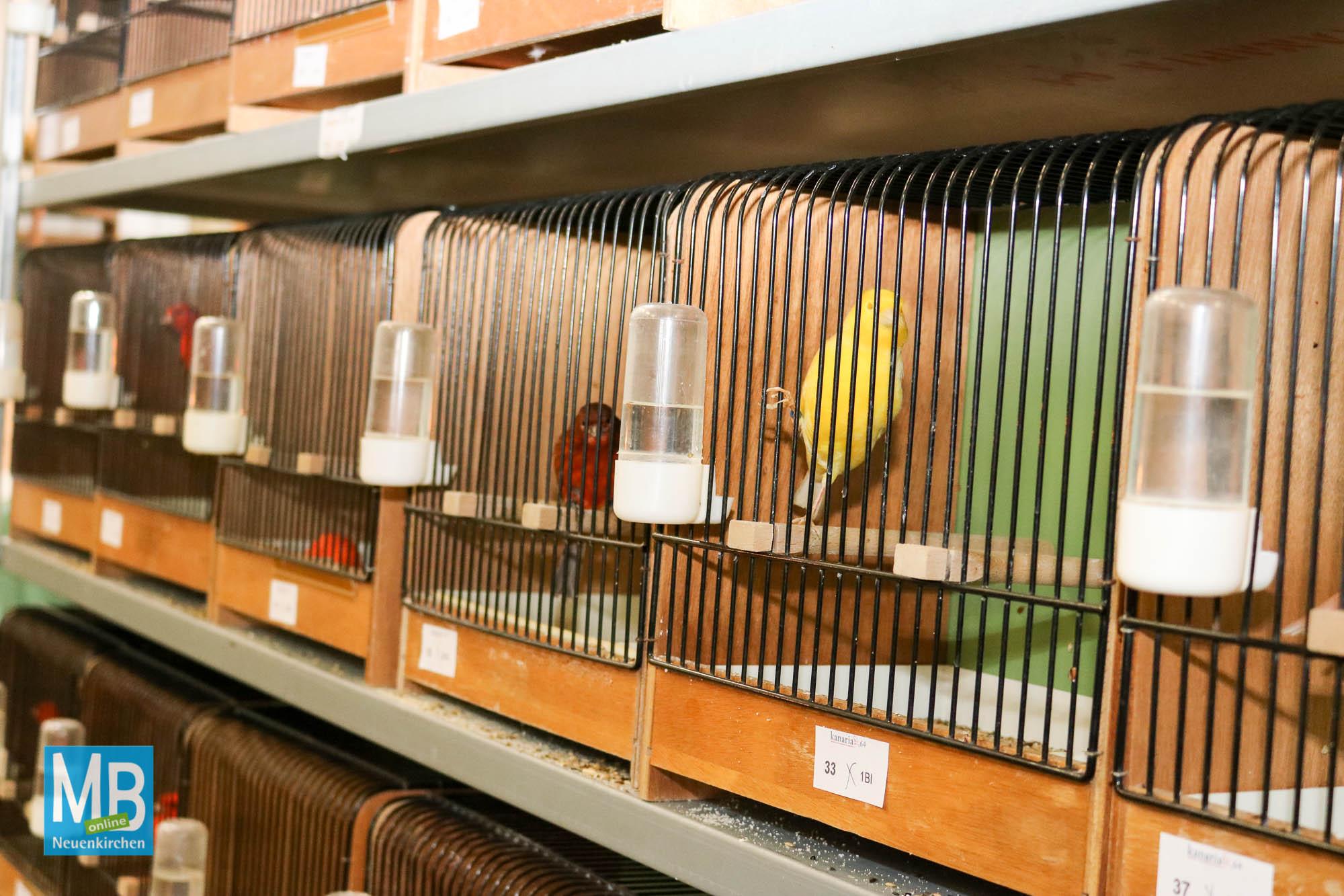 Vogelausstellung Reithalle Ulmker