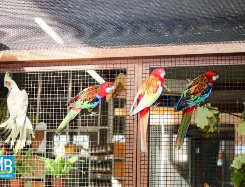 Kanarien, Papageien und Freiflugvoliere begeistern