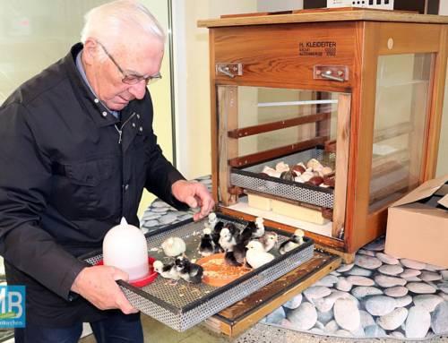 25 Jahre Live-Kükenschlupf im Schaubrüter