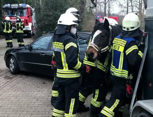 Tierische Rettung der Feuerwehr mit Happy End